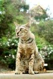 Bruine kattenzitting op muur Stock Fotografie