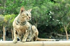 Bruine kattenzitting op muur Royalty-vrije Stock Afbeelding