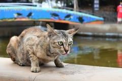 Bruine kattenzitting op muur in tuin Royalty-vrije Stock Afbeeldingen