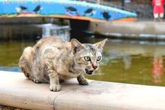 Bruine kattenzitting op muur in tuin Royalty-vrije Stock Afbeelding