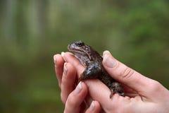 Bruine kikker in de handen van de vrouw royalty-vrije stock foto