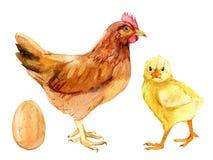 Bruine kip, leuk die kuiken en ei, op wit, waterverfillustratie wordt geïsoleerd royalty-vrije stock afbeelding