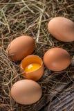 Bruine kippeneieren stock foto