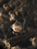 Bruine kruidnagel Stock Foto