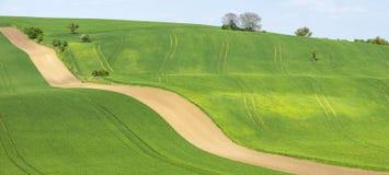 Bruine lijnen op landbouwgebieden Stock Foto
