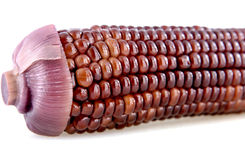 Bruine maïskolven Stock Afbeelding
