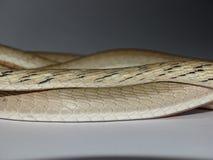 Bruine morphschaal van de wijnstokslang Stock Afbeeldingen