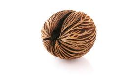 Bruine noten op witte achtergronden Stock Fotografie