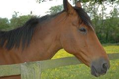Bruine paard witte pijl royalty-vrije stock afbeelding