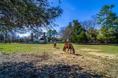 Bruine paarden in Koloniale Williamsburg Royalty-vrije Stock Afbeelding
