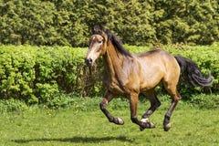 Bruine paardlooppas stock foto's