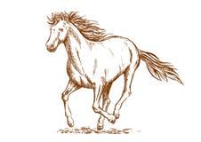 Bruine paardschets van Arabische merrie royalty-vrije illustratie