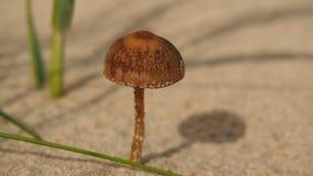 Bruine paddestoel Stock Foto