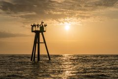Bruine pelikanen op een boei stock afbeeldingen