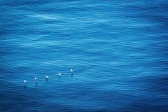 Bruine Pelikanen tijdens de vlucht vorming Royalty-vrije Stock Fotografie
