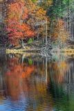 Bruine Provincie Autumn Reflections Stock Afbeeldingen