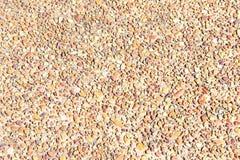 Bruine Rotsen in Grijs Cement Royalty-vrije Stock Fotografie