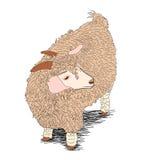 Bruine schapen Stock Fotografie