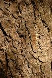 Bruine schors Royalty-vrije Stock Afbeelding