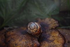 Bruine slak op een paddestoel royalty-vrije stock foto