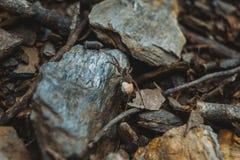 Bruine spin met eizak op grond van een bos stock foto's
