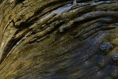 Bruine textuur van een oude boom Abstractie stock fotografie