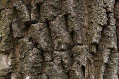 Bruine tileable textuur van de oude boom stock afbeelding