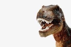 Bruine tyrannosaurus rex t -t-rex, het coelurosaurian didactische cijfer van de theropoddinosaurus met open mond royalty-vrije stock foto's
