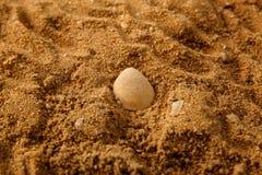 Bruine van de Overzeese de Textuurachtergrond Zandgrond Stock Foto's