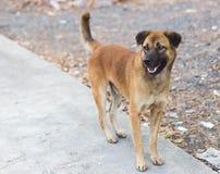 bruine verdwaalde hond status royalty-vrije stock foto's