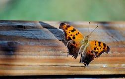Bruine vlinder die op houten oppervlakte rusten Stock Afbeelding