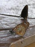 Bruine Vlinders op de Houten Lijst Stock Afbeeldingen