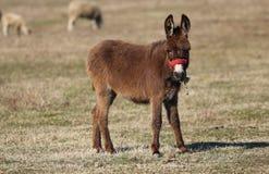 Bruine wilde ezel op de weide stock afbeelding