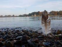 Bruine witte veer bij de rotsachtige kustlijn royalty-vrije stock fotografie
