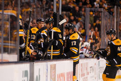 Bruins Bench Stock Image