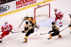 Bruins on defense. Stock Photography