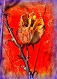 Bruit moderne coloré et créatif Art Yucca Pod Images stock