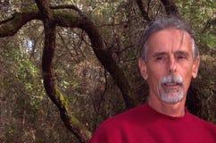 Bruits dans les arbres image libre de droits
