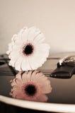 Bruits purs de l'amour, plan rapproché Images libres de droits