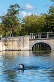 BRUJAS, BÉLGICA EUROPA - 26 DE SEPTIEMBRE: Nadador por un puente encima Imágenes de archivo libres de regalías