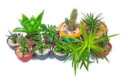 bruk för växt för leaf för bakgrundsdetaljhus arkivfoto