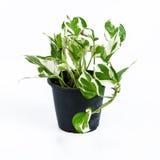 bruk för växt för leaf för bakgrundsdetaljhus royaltyfri foto
