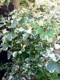 bruk för växt för leaf för bakgrundsdetaljhus Arkivbilder
