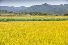 Bruka fält med avlägsna berg Royaltyfri Foto