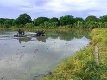 Bruka i Thailand Lantbrukutrustning Arkivbilder
