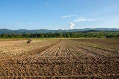 Bruka med traktoren och plogen i fält med berget Papuk i th Royaltyfri Bild