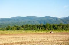 Bruka med traktoren och plogen i fält med berget Papuk i th Arkivfoton