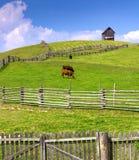 Bruka platsen med kor som är bifogade vid ett trästaket och stuga på t Royaltyfri Bild