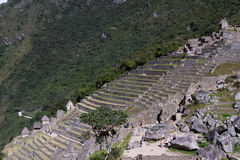 Bruka terrasser i Machu Pichu Royaltyfria Bilder