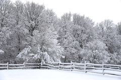 Brukar ny snö fyllda fållastaket på den snöig hästen för den lantliga vintern Arkivfoton